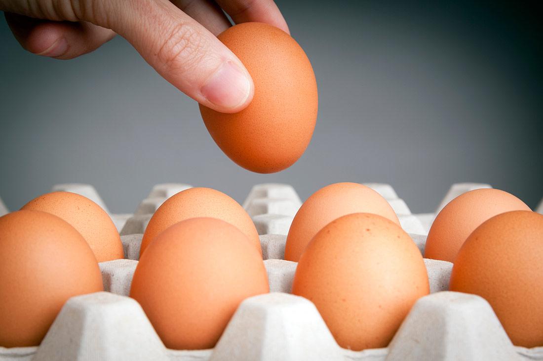Proveedores de Huevos en España