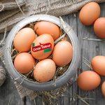Respondemos ¿Primero fue el huevo o la gallina?