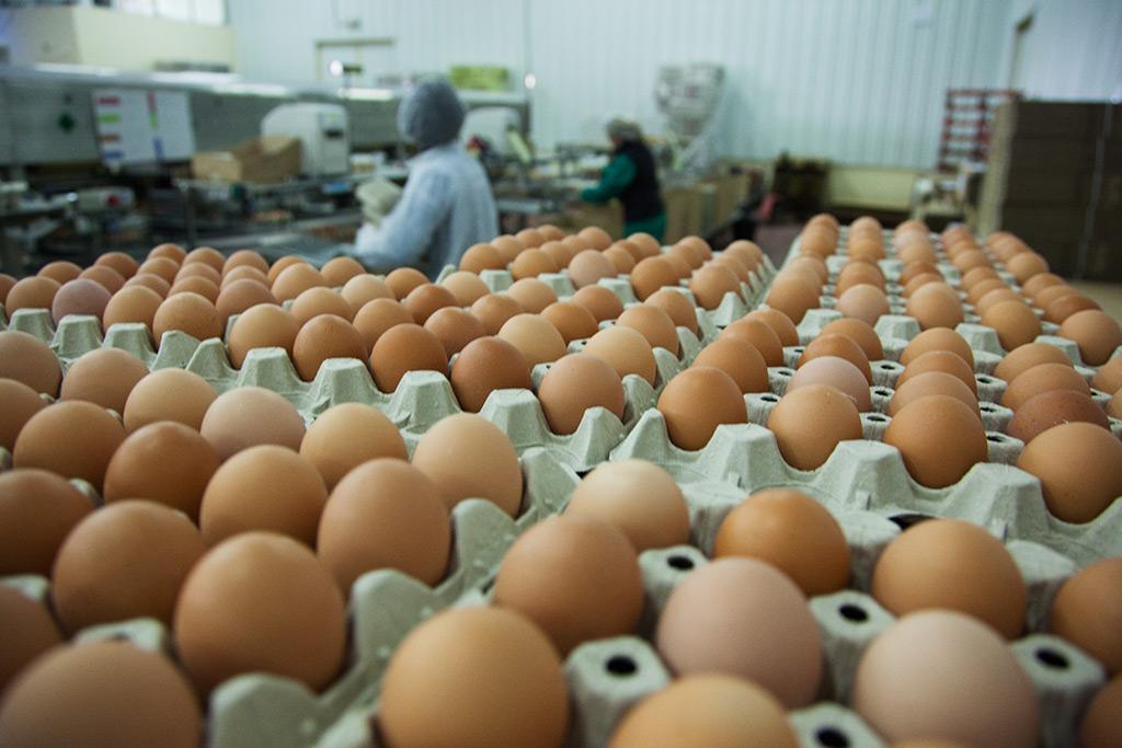 Comprar huevos al por mayor en Burgos
