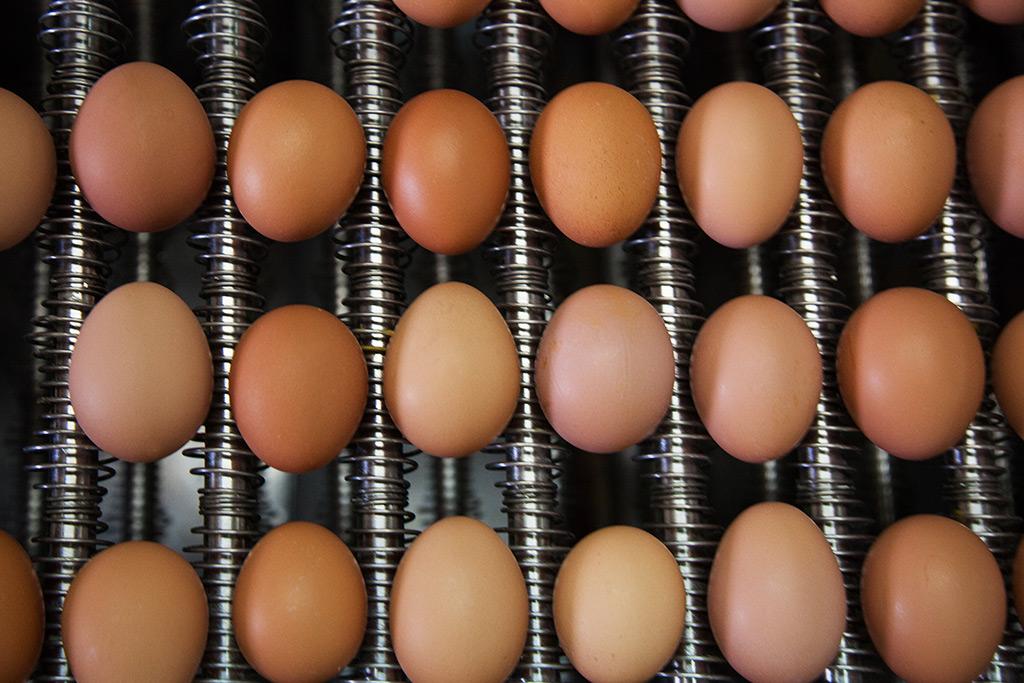 Distribuyendo de Huevos al por mayor