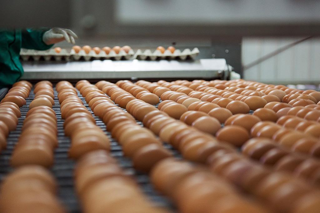 Listos para comprar huevos al por mayor