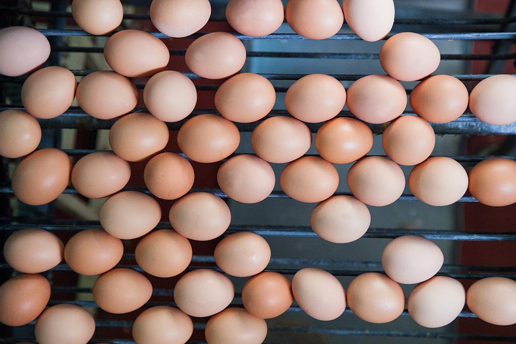 Comprar huevos al por mayor de Castilla y León