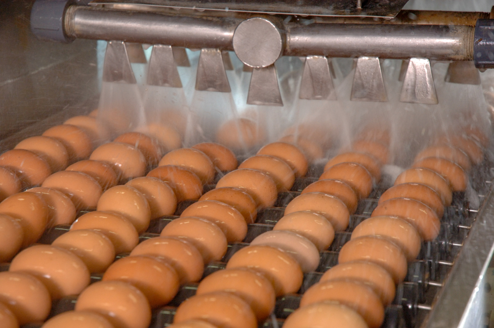 Venta de huevos para distribuidores1