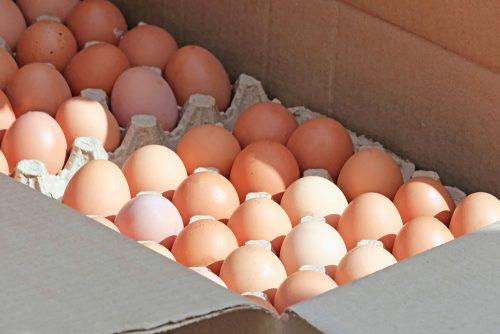 Venta de huevos para distribuidores