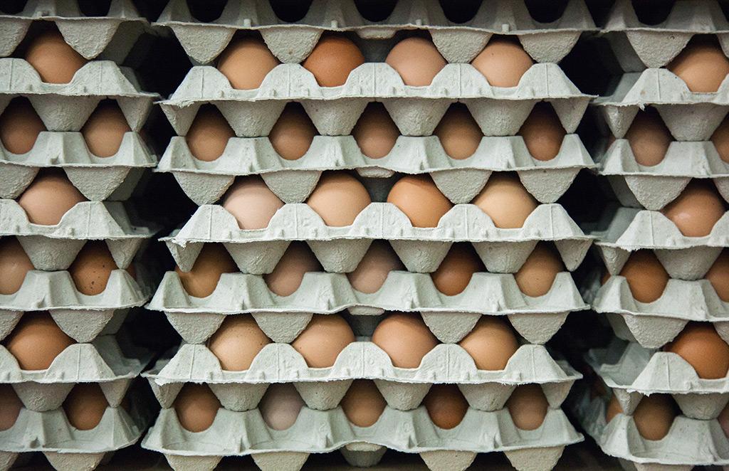 Proveedores de huevos al por mayor