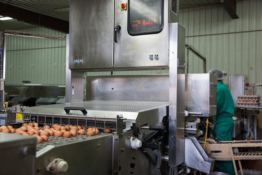 Detector de Huevos rotos al por mayor
