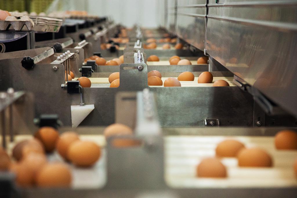 Distribuidores de Huevos por mayor