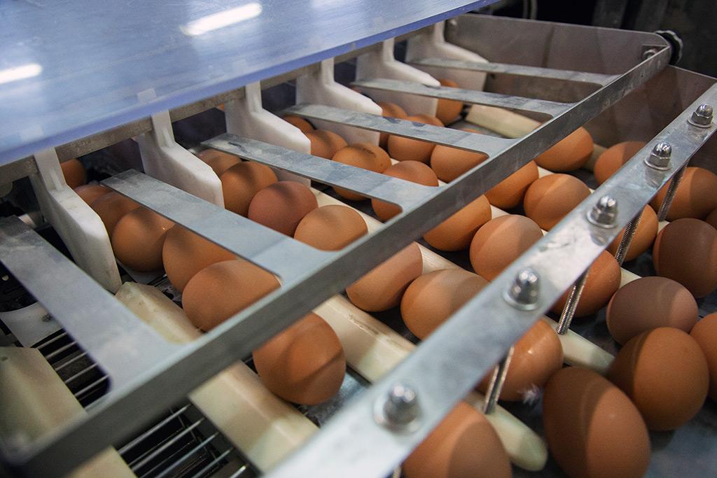Venta de huevos camperos en España