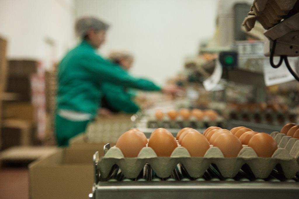Granjas de Huevo por mayor en España