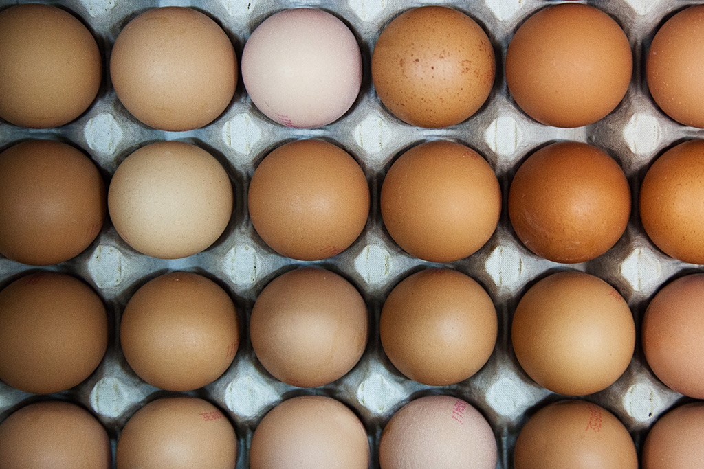 Huevos de granja, distribución en España